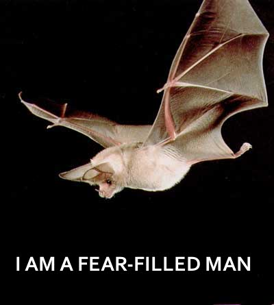 Bat Fear Filled
